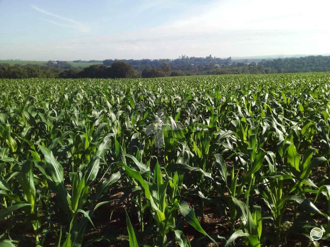 IMÓVEIS SITIOS  20 Terra Mais Implementos Agrícolas