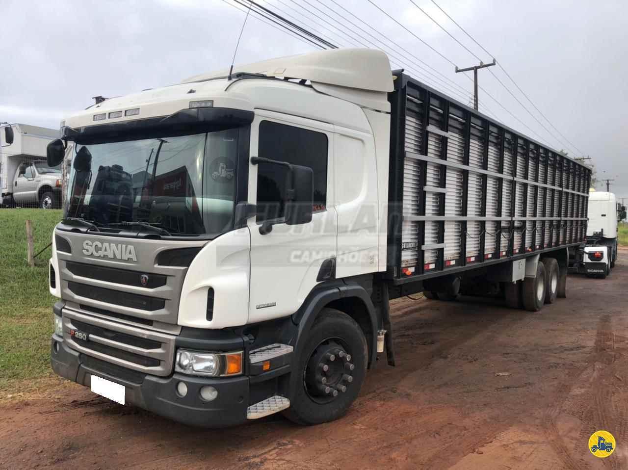 CAMINHAO SCANIA SCANIA P250 Boiadeiro Truck 6x2 Furlan Caminhões UMUARAMA PARANÁ PR